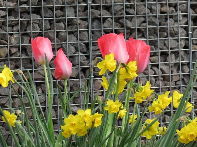 Gabionen mit Blumen